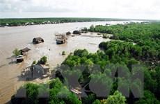 Cà Mau tập trung phát triển mô hình nuôi tôm-rừng bền vững