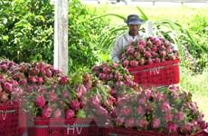 Nông sản Việt Nam nhắm tới thị trường Ấn Độ đầy tiềm năng