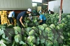 Cần Thơ hợp tác với Hà Lan giảm thiểu thất thoát nông phẩm