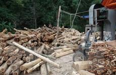 """Doanh nghiệp gỗ """"ăn đong"""" nguyên liệu, sản xuất cầm chừng"""