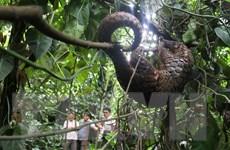 Việt Nam nỗ lực bảo tồn loài tê tê khỏi sự tuyệt chủng