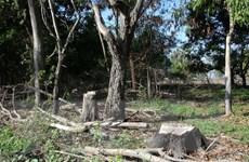 Tây Ninh: Người dân ồ ạt chiếm đất rừng phòng hộ để trồng sắn