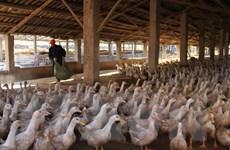 Bệnh nhân Trung Quốc đầu tiên chết vì nhiễm virus cúm H5N6