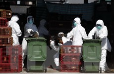 Trung Quốc ghi nhận thêm 1 ca tử vong do nhiễm virus cúm H7N9
