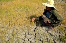 Ra phương án chuyển đổi cây trồng nhằm ứng phó với hạn hán