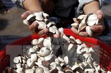 Bình Thuận cấm đánh bắt các loài hải đặc sản trong mùa sinh sản