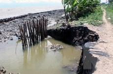Cà Mau: Ba cửa biển chính bị sạt lở và xuống cấp nghiêm trọng