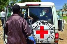 Mali: Nhóm bắt cóc 3 nhân viên Chữ thập Đỏ đòi trao đổi con tin