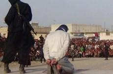 IS hành quyết 4 thanh niên bị cáo buộc làm gián điệp tại Raqa