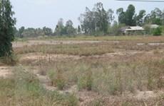 Tiền Giang mất hơn 104 tỷ đồng vì khô hạn và xâm nhập mặn