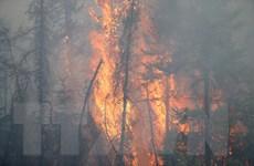 Giá dầu châu Á tăng gần 2% sau các vụ cháy rừng lớn ở Canada