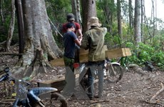 Thủ tướng yêu cầu tiếp tục làm rõ vụ việc phá rừng tại Đắk Glei