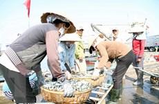 Hỗ trợ chuyển đổi sinh kế cho ngư dân bị ảnh hưởng vì hải sản chết
