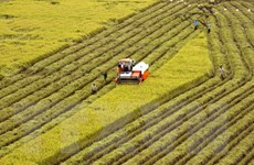 Bình Định tiếp tục gắn tái cơ cấu nông nghiệp với xây nông thôn mới