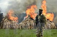 67% số lượng động vật hoang dã sẽ biến mất vào năm 2020