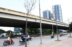 Hà Nội yêu cầu khẩn trương trồng thay thế gần 100 cây chết khô