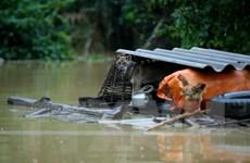 Mưa lớn diện rộng gây lũ lớn trên các sông khu vực miền Trung