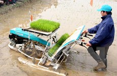 """Hà Nội vẫn là """"vùng trũng"""" về cơ giới hóa trong nông nghiệp"""