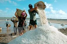 Bến Tre tồn kho hơn 43.000 tấn muối, đề nghị hỗ trợ tiêu thụ
