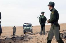 Algeria triệt phá một mạng lưới khủng bố nguy hiểm
