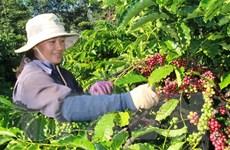 Cơ hội lớn cho càphê hòa tan Việt chinh phục thị trường ASEAN