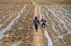 LHQ: 2/3 dân Triều Tiên sống trong tình trạng mất an ninh lương thực