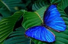 Mê hồn triển lãm hơn 400 loài bướm nhiệt đới xinh đẹp ở Rome