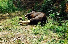 Đối tượng giết bò tót trong khu bảo tồn Đồng Nai lĩnh án 5 năm tù