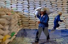 Hoàn thiện Đề án Chiến lược phát triển thị trường xuất khẩu gạo