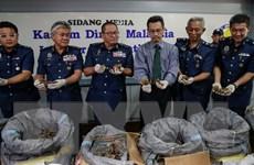 Malaysia tịch thu hơn 700kg vảy tê tê trị giá tới 2,1 triệu USD