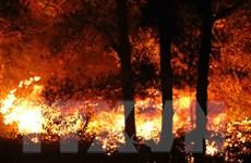 Hỏa hoạn suốt 12 giờ đã đốt trụi 100ha rừng trồng ở Sóc Sơn