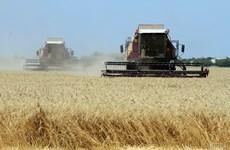 Ukraine xuất khẩu ngũ cốc cao kỷ lục trong niên vụ 2016-2017