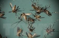Mỹ phát hiện muỗi mang virus Zika tại miền Nam bang New Mexico