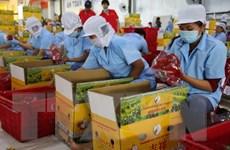 """Kim ngạch xuất khẩu tốt nhưng nhiều trái cây Việt vẫn """"vô hình"""""""