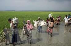 Malaysia lo ngại IS tuyển mộ người tị nạn Hồi giáo Rohingya