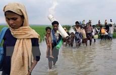 [Infographics] Người Hồi giáo Rohingya ở Myanmar di cư lánh nạn
