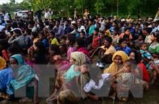 LHQ: Đã có 313.000 người Rohingya chạy sang Bangladesh