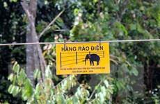 Xuất hiện một đàn voi mới tại khu rừng thuộc địa bàn Đồng Nai