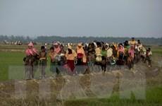 Trung Quốc và Mỹ đề nghị viện trợ cho người Hồi giáo Rohingya