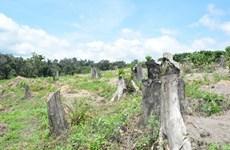 Chính quyền 'bó tay' nhìn rừng phòng hộ bị lấn chiếm 22 năm