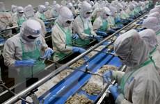 EU rút thẻ vàng đối với hoạt động khai thác thủy sản của Việt Nam