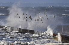 Nhiều quốc gia châu Âu bị ảnh hưởng nặng nề bởi bão mùa Đông