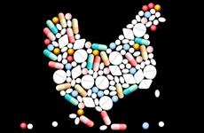 FAO cảnh báo hậu quả lạm dụng kháng sinh ở các nước Đông Nam Á