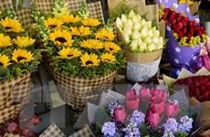 Colombia xuất khẩu 600 triệu cành hoa sang Mỹ trong dịp Valentine
