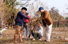 Độc đáo phiên chợ mai đá phục vụ người Việt tại Lào trong dịp Tết