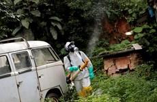 Brazil bùng phát dịch sốt vàng da khiến 61 người thiệt mạng