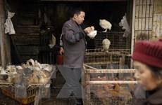 Xuất hiện ca nhiễm cúm H7N4 đầu tiên trên thế giới ở Trung Quốc
