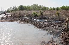 Cà Mau: Kiểm điểm Chủ tịch xã để xảy ra phá rừng bãi bồi nuôi sò huyết
