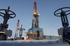 Giá dầu giảm do dự trữ dầu mỏ của Mỹ tăng cao hơn dự kiến