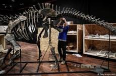 Người bí ẩn đấu giá mua xương hóa thạch khủng long 150 triệu năm tuổi